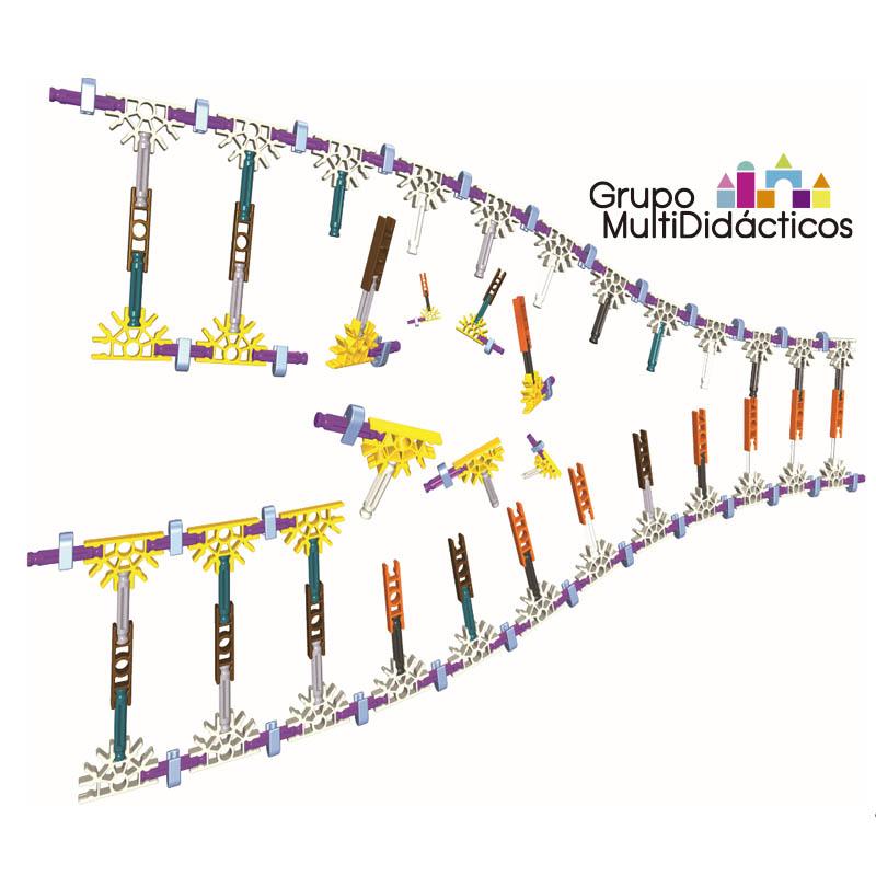 https://multididacticos.com/images/productos/peq/ADN%202.jpg