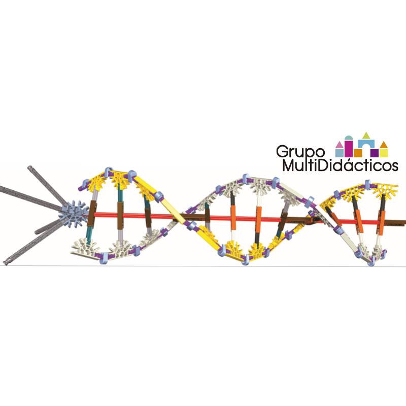 https://multididacticos.com/images/productos/peq/ADN.jpg